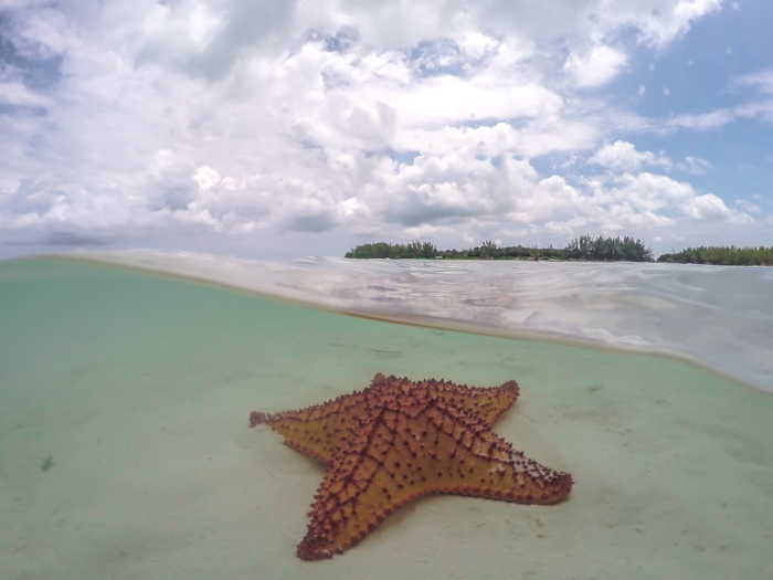 Do This, Not That // 2 Days in The Bahamas   Using a GoPro dome to take pictures of starfish in The Bahamas   Underwater photography in the Caribbean #thebahamas #bahamas #gopro #starfish #caribbean #beachvacation #island #photographytips