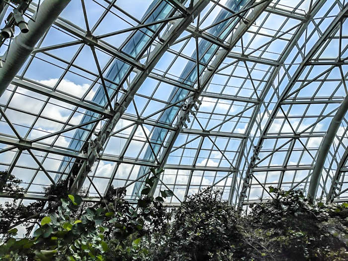 Florida aquarium atrium // How to use the Tampa Bay CityPASS as a childless adult. #aquarium #tampabay #florida #citypass #traveltips #vacation #tampa #timebudgettravel