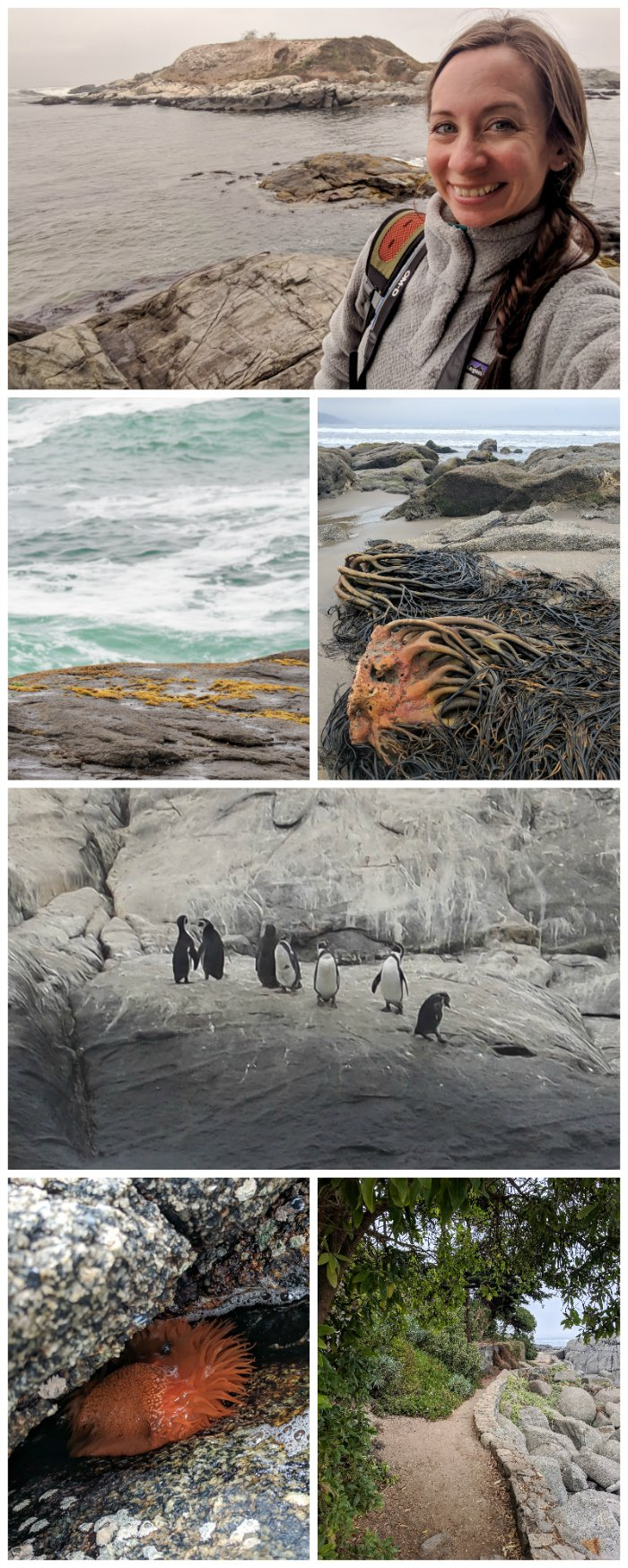 How to Spend One Week in Chile and Cover All the Bases | Spending the day with penguins on the Isla de Cachagua #chile #valparaiso #whattodoinchile #weekinchile #penguins #cachagua #beach