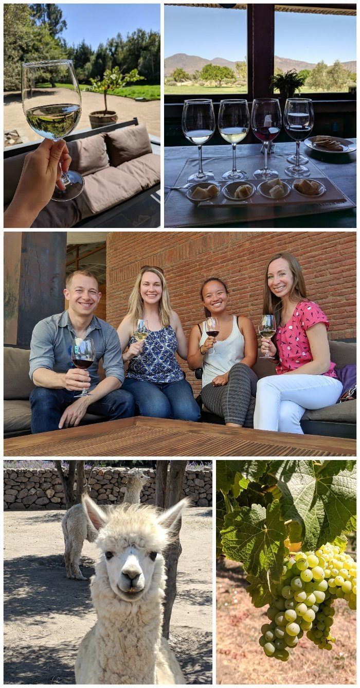 How to Spend One Week in Chile and Cover All the Bases | Wine tasting in Chile's Casablanca valley with alpacas and cheese | Viña Emiliana, Viña Casas del Bosque, Viña Bodegas RE #chile #valparaiso #alpacas #wine #whattodoinchile #weekinchile #winetasting #casablanca