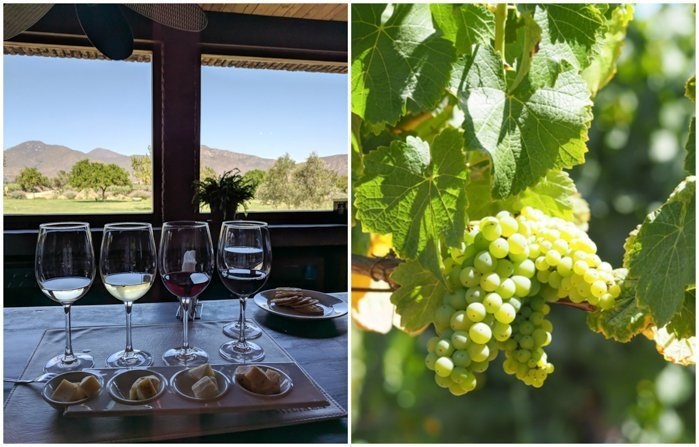 Our glasses at Vina Emiliana winery | Wine Tasting in Chile: Casablanca vs. Maipo Valley | How to decide where to go wine tasting in Chile | Casablanca valley wineries | #chile #wine #winetasting #vineyard #emiliana #casablanca