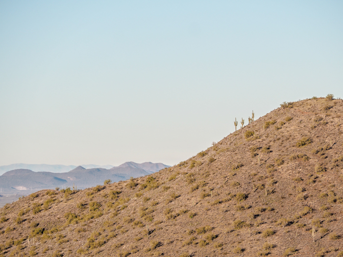 Cacti on the side of a mountain | What You Need to Know for Your Sunrise Hot Air Balloon Ride in Arizona | Scottsdale and Phoenix, Arizona hot air balloon rides with Hot Air Expeditions