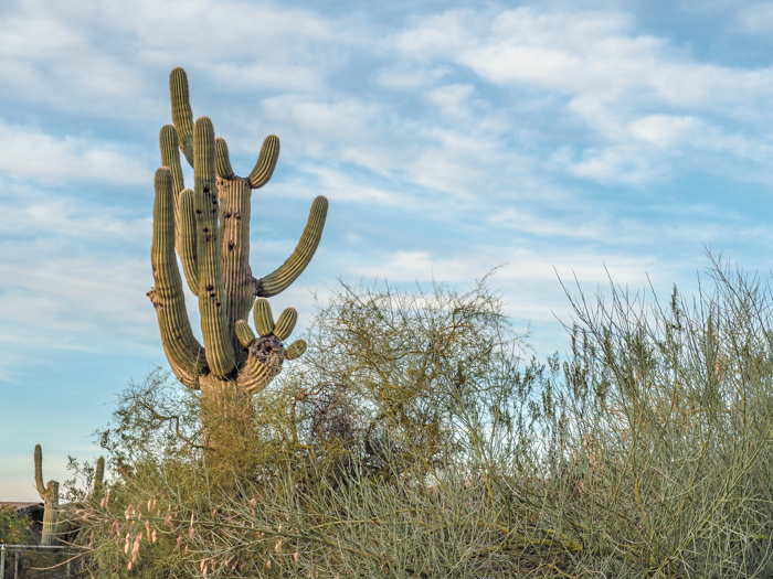 4 Days in Scottsdale, Arizona // A Jam-Packed Itinerary With a Bit of Everything | Things to do in Scottsdale: metate trail hike with civana, #hiking #desert #civana #scottsdale #arizona