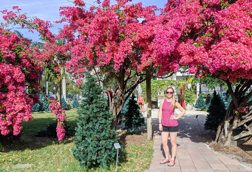 2 days in Fort Myers, Florida, a fun weekend itinerary: Edison and Ford Winter Estates, pink bougainvillea