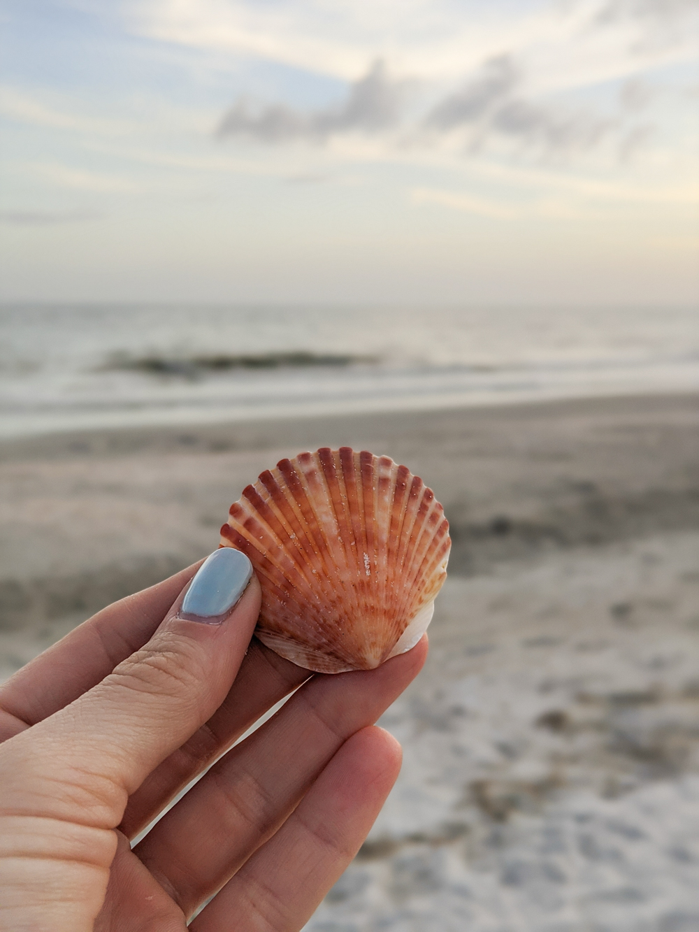 2 days in Fort Myers, Florida, a fun weekend itinerary: Sanibel island seashell