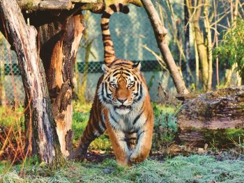 I worked at Big Cat Rescue. Here's What You Need to Know about Tiger King and Travel