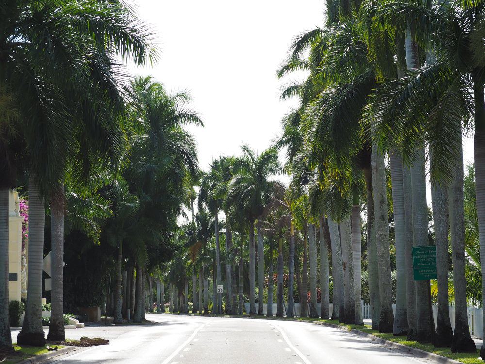 2 days in Fort Myers, Florida, a fun weekend itinerary: palm trees on mcgregor blvd