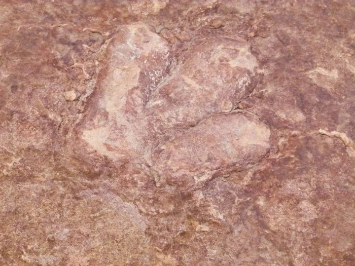 Dinosaur footprints, dinosaur tracks at one of the historical sites in san antonio texas