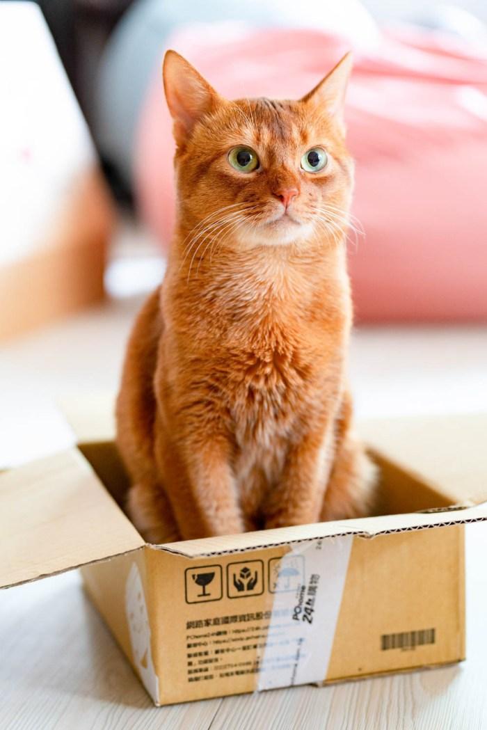 orange cat sitting in a cardboard box