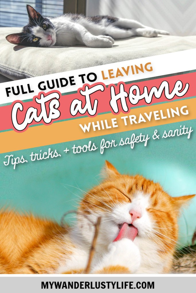 Leaving Cats at Home While on Vacation: A Complete Guide to Safety & Sanity