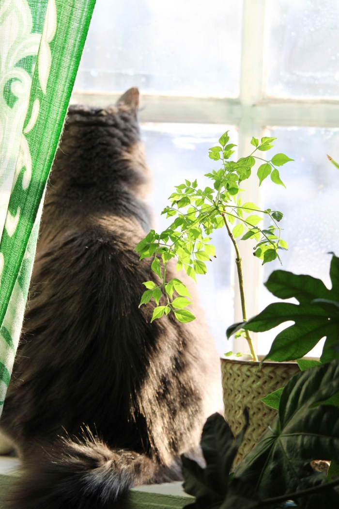 Brown cat looking out a window next to a houseplant