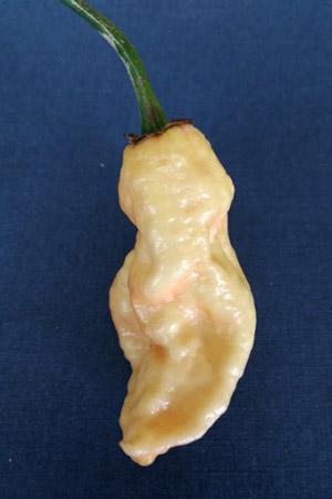 Confezione mista di Peperoncini Freschi da 300 grammi