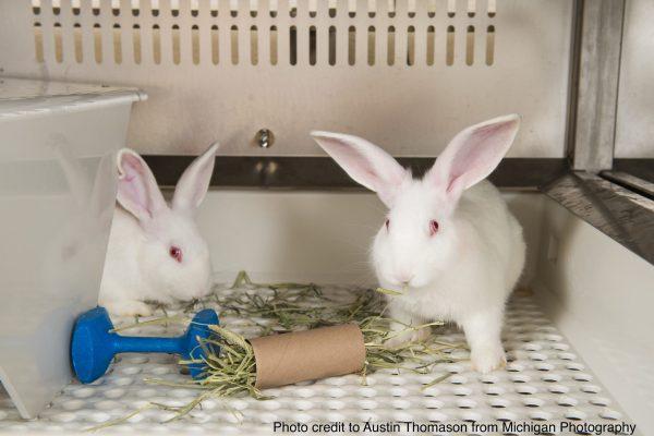 Rabbit housing & handling