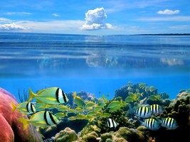Wasserwelt in Costa Rica (Foto: vilainecrevette | iStockphoto | Thinkstock)