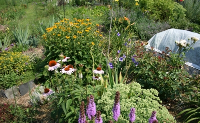 Massachusetts Butterfly Club   Butterfly Gardening Excellent sources of information on butterfly gardens
