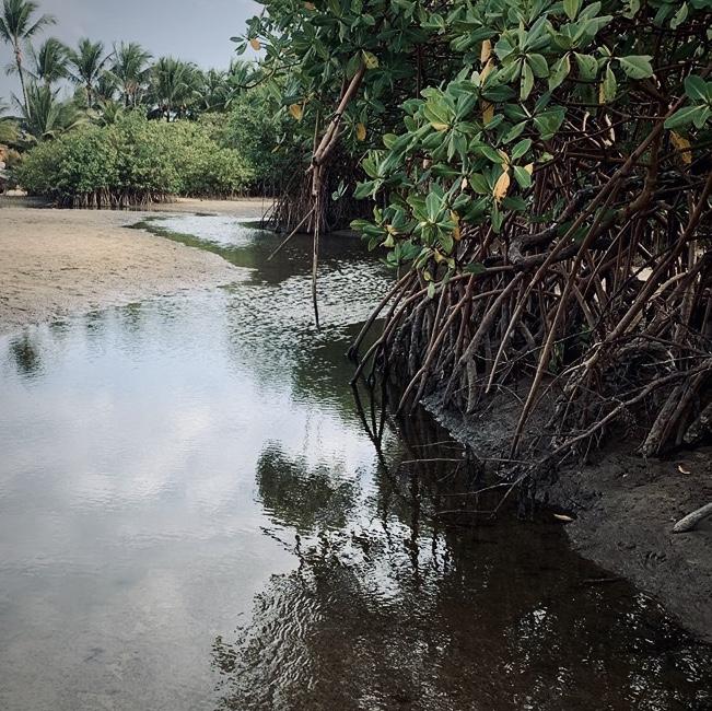 Magrovia Trancoso