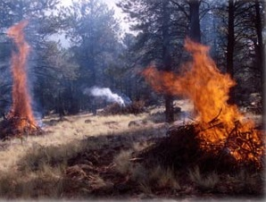 Slash piles are constructed and burned as a form of wildfire mitigation