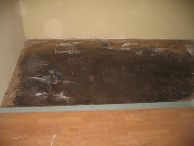 This laminate flooring's sublayer has been damaged by mold.