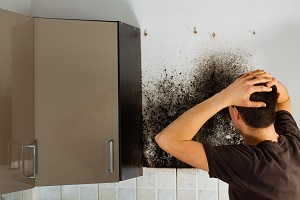 Is Mold Growing in Your Queenstown Home?