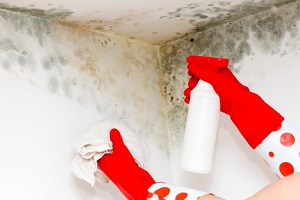 Signs Your Maryland Home Has Mold