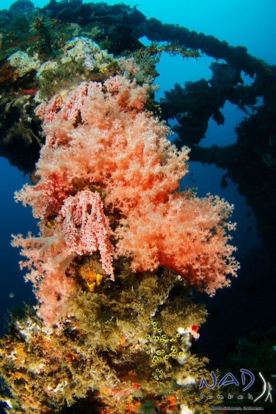 Soft Coral on the Deck