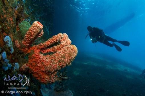 Sponge and Diver