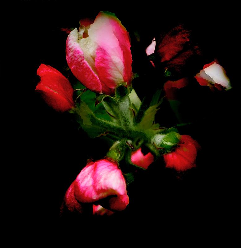 Flower power © Nadia Rabhi -5