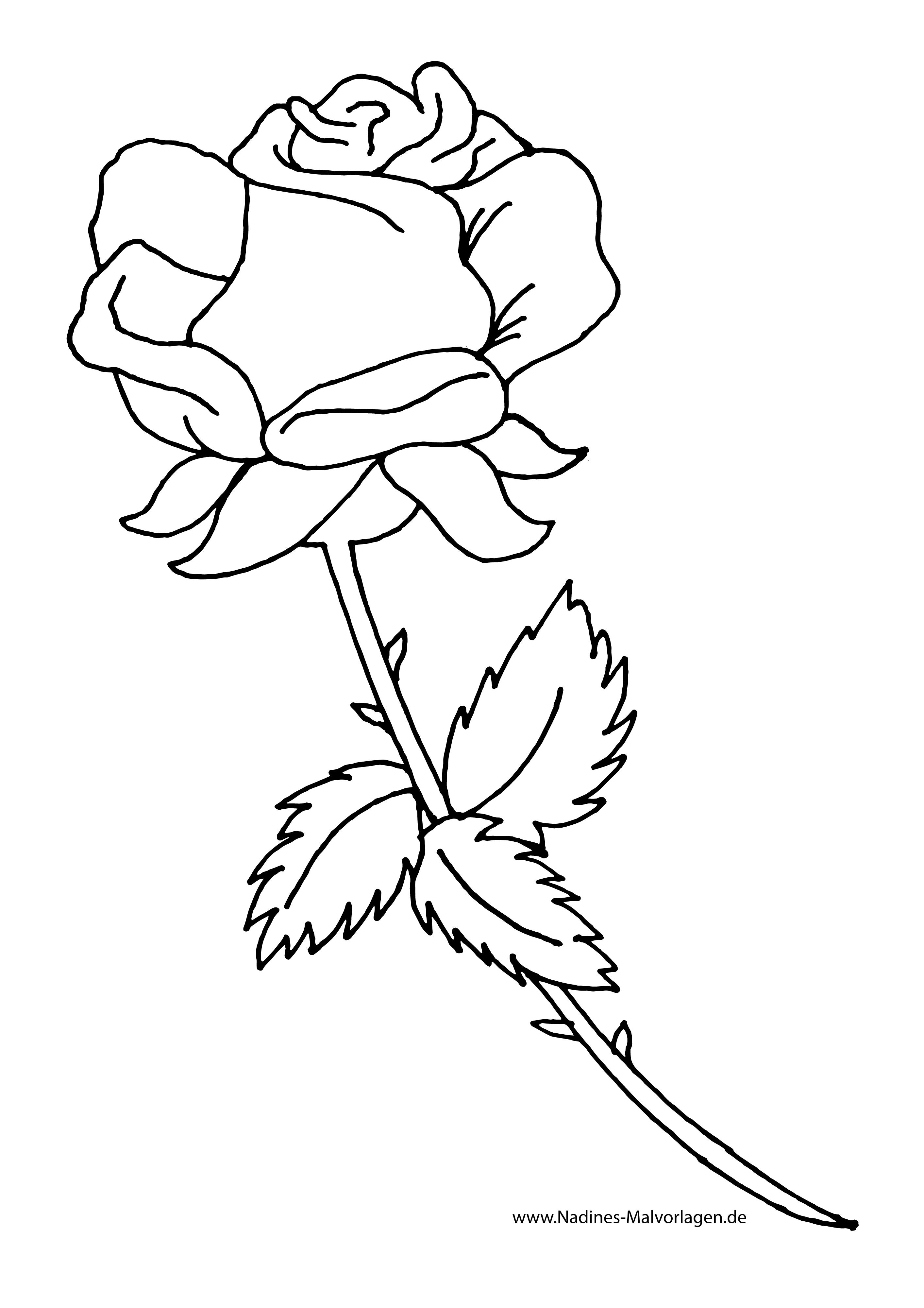 Rote Rose Zum Selbst Ausmalen