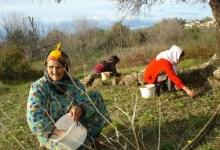 Photo of 60 ألف امرأة تنشط في قطاع الفلاحة