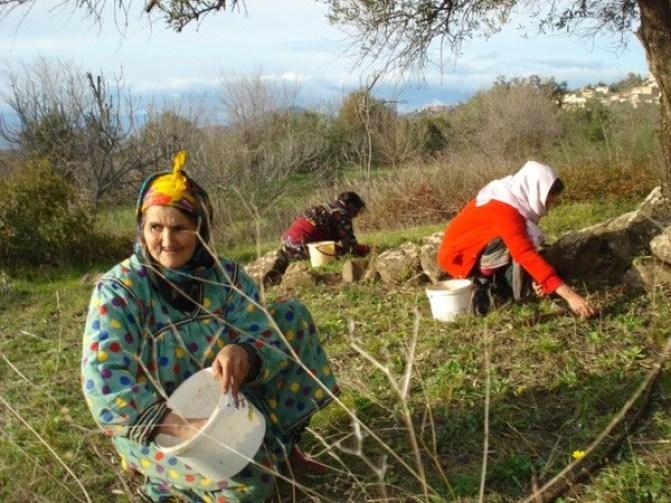 المرأة الفلاحة المرأة الريفية