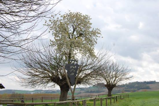 ένα δέντρο φύτρωσε πάνω σε ένα άλλο
