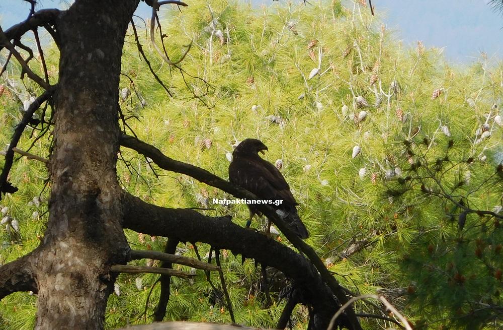 Μεγάλο πουλί ηλικιωμένες βίντεο