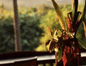 restaurant flower detail