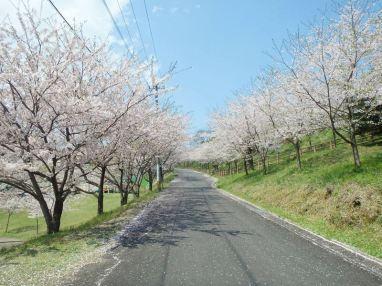 20201007-kankoka-kotohiraskypark (3)