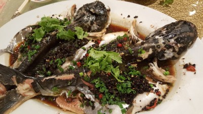 Asia Grand Restaurant at Odeon Tower Singapore - Steamed Fresh Pa-Ting Fish with Olives, Garlic and Chilli, 榄角蒜茸辣椒蒸八丁鱼
