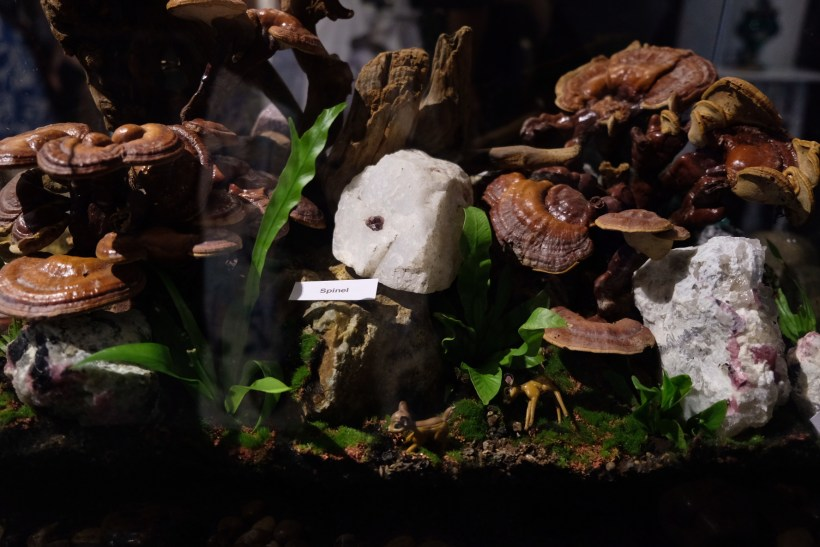 The Lost World of Terranova by The Gem Museum At Singapore Night Festival 2018 - Terrarium