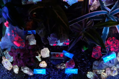 The Lost World of Terranova by The Gem Museum At Singapore Night Festival 2018 - Glowing Terrarium