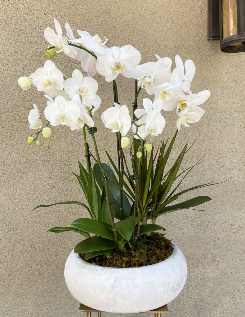 Large Orchid Garden for Sympathy