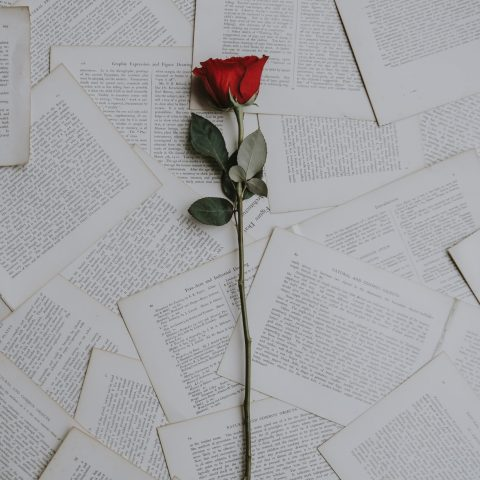 Single red rose on pages by Annie Spratt