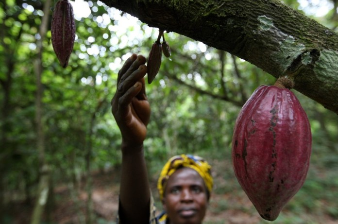 Nigeria's cocoa mid-crop output seen weak as coronavirus disrupts farmers exports creating backlog of unshipped beans