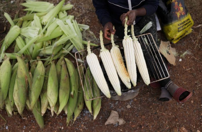 Poultry Farmers  urges FG to ban exportation of maize