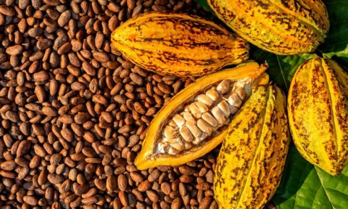 This Africa's Cocoa Producer Weighs Increase in Bean Quality Premium