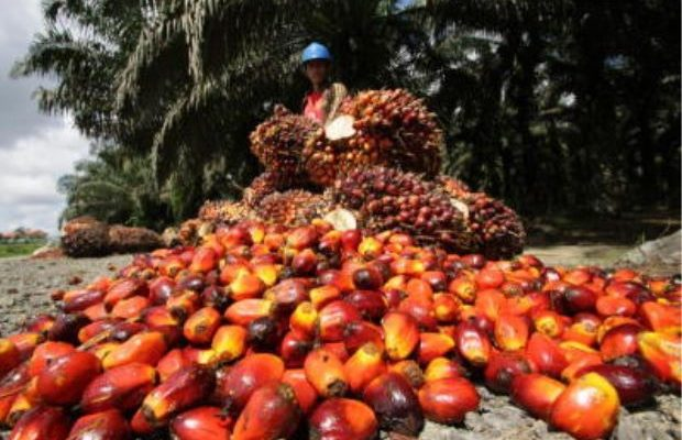 Group urges measures to tackle dwindling fortunes in oil palm sector
