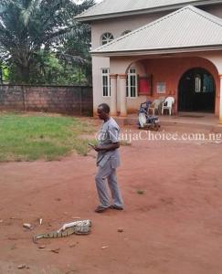 How Hot Prayers Allegedly Caused Fight Between Two Big Snakes In Anambra - Pastor Shares Photos