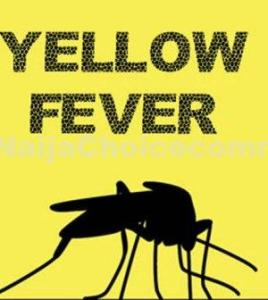 8Key Facts About Yellow Fever You Shoul