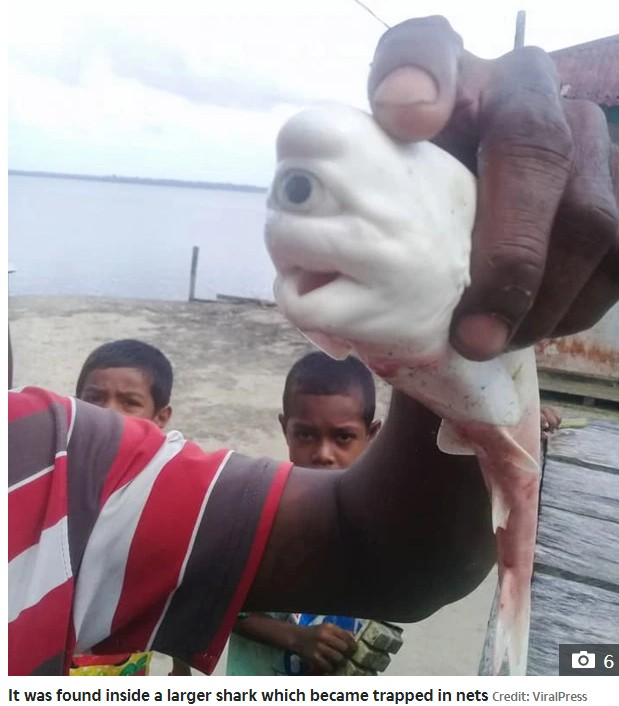 Rare Mutant, One - Eyed Albino Baby Shark Found In Indonesia (Pictures)
