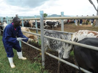 FG Shortlists 21 States For Pilot Grazing Reserves