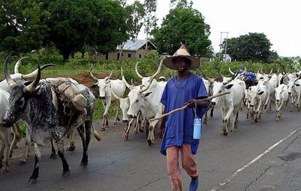 Image result wey dey for The Middle Belt Forum on Monday accused Fulani herdsmen of committing genocide against fellow Nigerians in the country.