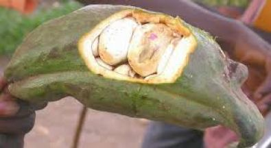 health benefits of kola nut