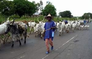 Miyetti Allah Herdsmen Tender Fresh Demands Before Government